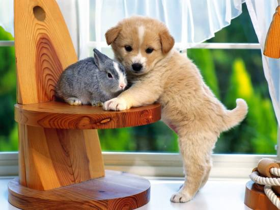 46488-bunnies-bunny_rabbit_puppy_cute_desktop